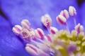 Ročné obdobia v makrofotografii a v detailoch - Jar