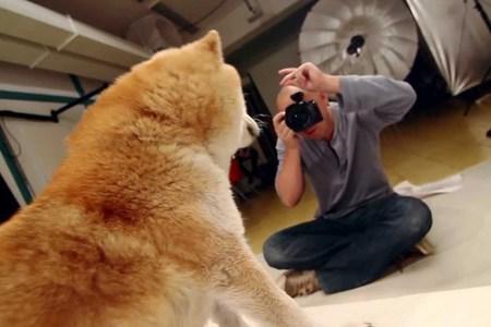 Fotíme domáci mazlíčky