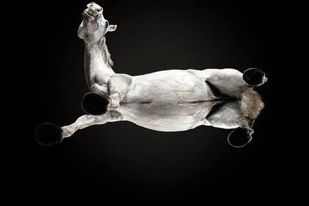 Fotografovanie koní z netradičnej perspektívy