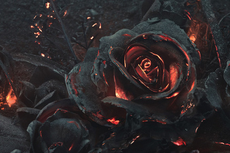 Tlejúce ruže