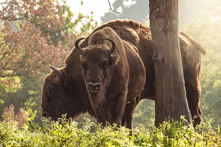Základná výbava pre fotografovanie V. - wildlife