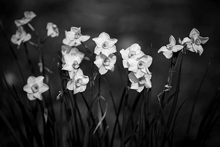 Jarná botanická