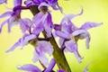 Naše orchidey