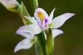 Letné orchidey