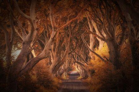 30 najkrajších fotografií prírody z minuloročných medzinárodných fotografických cien
