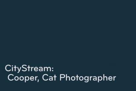 Cooper, Cat Photographer