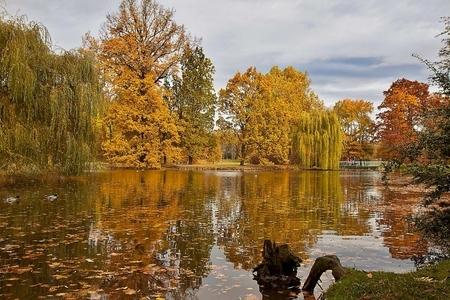 Jesenná krása stromov v Prahe