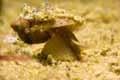 Fotografovanie podvodného sveta pomocou periskopu