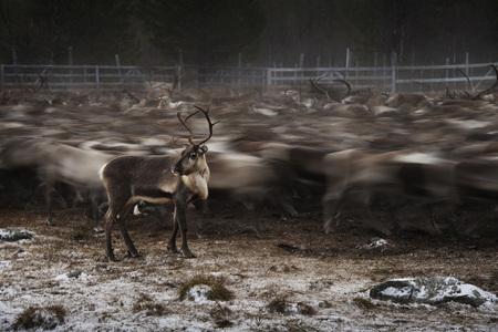 Nevypovedané príbehy ľudí z komunity Saami