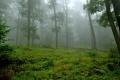 Les a jeho život
