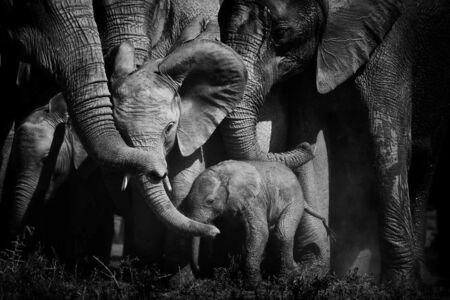Peter Delaney strávil nespočetné hodiny so slonami, tu je jeho 24 obľúbených fotiek