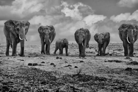 Mrcove príbehy fotografie I. - Keňa