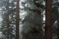 Západom USA 3.časť - NP Sequoia