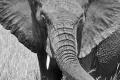 Smelá Zuz(k)a v Afrike - fotopríbehy: Slonia láska