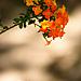kvet.jpg