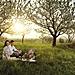 00000064333-kirschbluete-im-burgenland-burgenland-tourismus-Peter Burgstaller.jpg