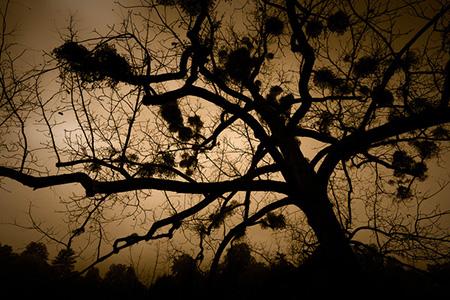 Zimné stromovanie