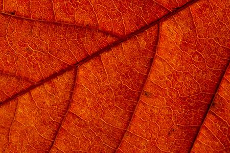 Jesenná mozaika