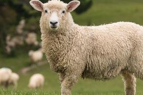O ovciach a fotografoch