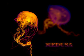 Ešte raz vo svete medúz