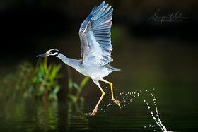 28 krásnych vtákov, ktoré som našiel pri vode