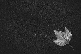 Posledné jesenné listy