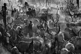 Fotografuje zvieratá a ľudí, ktorí nazývajú Keňu svojím domovom