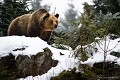 Bayerischer Wald- Medveď hnedý