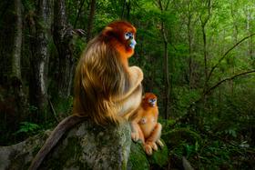 Putovná výstava ohromujúcich fotografií Wildlife Photographer of the Year