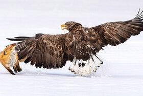 Bird Photo of the Year 2021 - finalisti