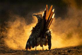 11 víťazov prestížnej súťaže vo fotografovaní vtákov Audubon 2021