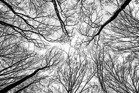 Zimné stromovanie II. - čiernobielo