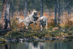 Create Your Light: Wildlife fotografia s Konsta Punkka, rozprávačom s veveričkami