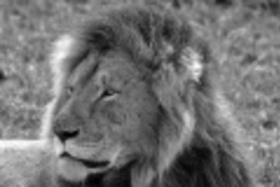 Smelá Zuz(k)a v Afrike - fotopríbehy: Kráľovské raňajky