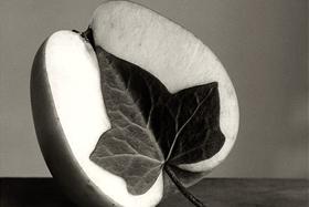 Čiernobiele ilúzie Chema Madoza
