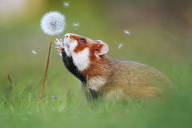 40 Wildlife fotografií od víťazného fotografa Juliana Rada