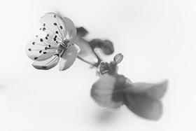 Botanica blanco