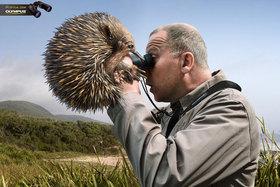 25  netradičných reklamných fotografií zvierat