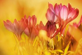 Jarná flóra v detaile