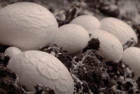 Ako rastú huby (timelaps)