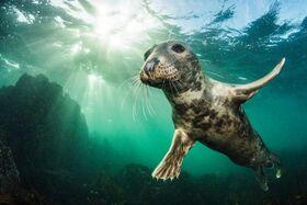 15 z najlepších obrázkov zvierat desaťročia z udeľovania cien British Wildlife Photography Awards