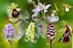 Jarné orchidey