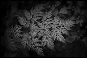 Botanica Noir