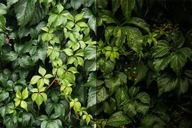Receptár: Zelená textúra