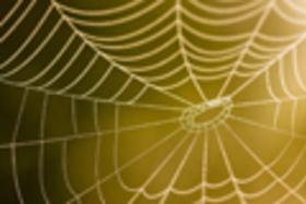 Chytanie pavúčích pokladov