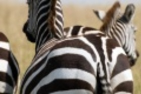 Smelá Zuz(k)a v Afrike - fotopríbehy: Boj na život a na smrť