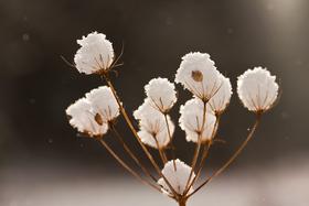 Zimné radovánky pre fotografov