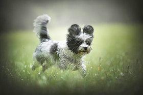 8 tipov pre fotografovanie psov